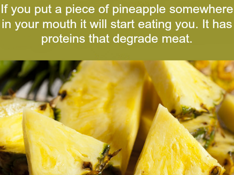 Pineapple Fact